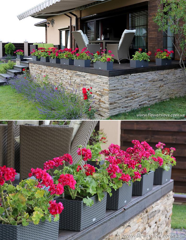 цветы для загородного дома