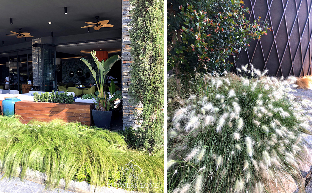 Декоративные травы купить киев