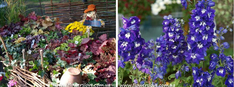 flowerslove2012