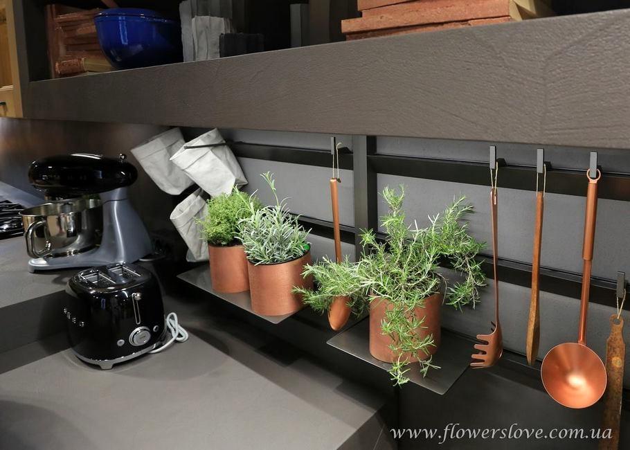 пряные травы кухня модерн