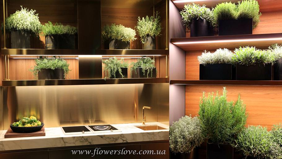 модная кухня пряные растения