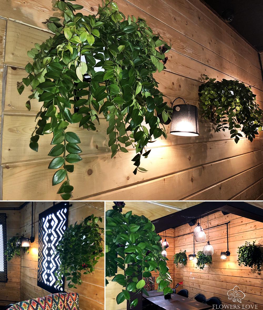 озеленение ресторана буковель
