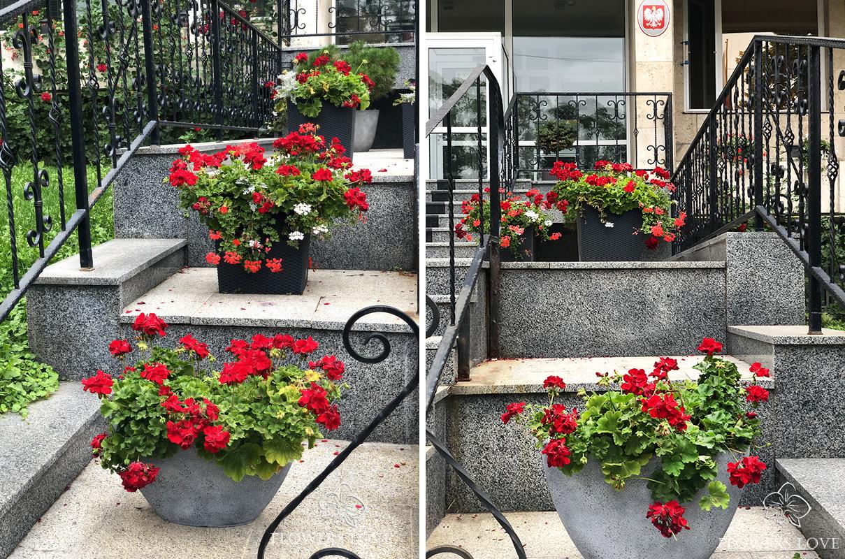 озеленение посольства польша