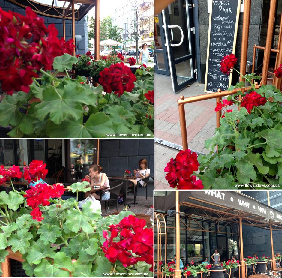 цветы вопрос бар