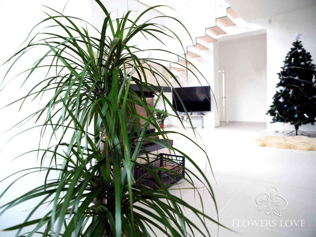 цветы для дома и офиса озеленение