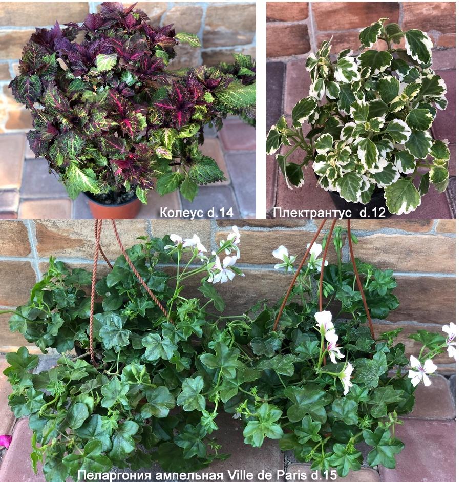 cvety-dlya-balkona-dostavka-ozelenenie