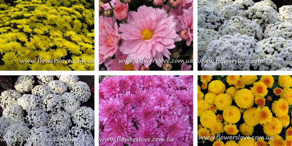 flowerslove