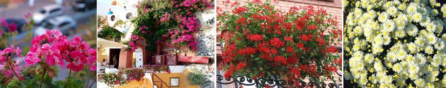 cvety_dlya_oteley