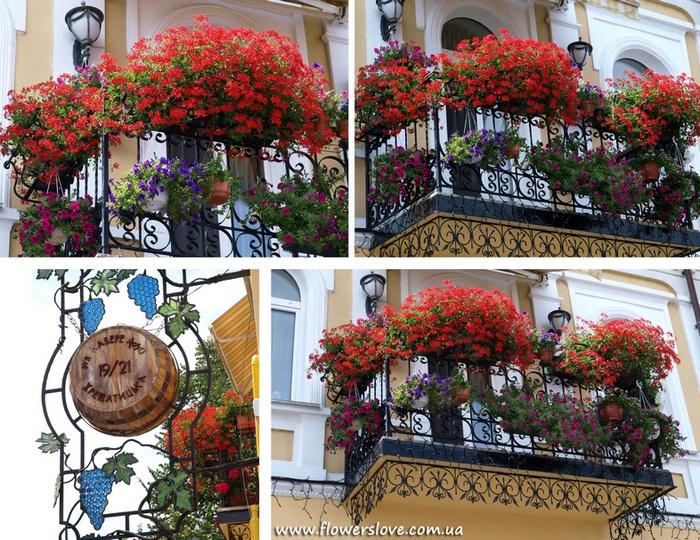 flowerslove_restoran_masandra[1]