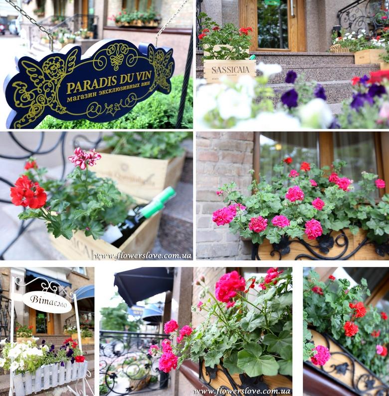 цветы для магазина оформление летней террасы