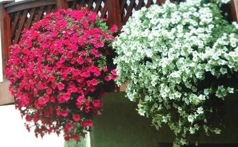 Привлекательной окраской цветков в