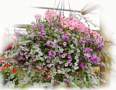 Варианты оформления цветочных