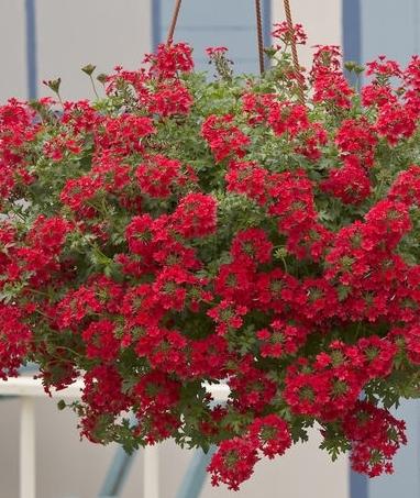 Цветы на балконе ампельные купить интернет магазин искусственные цветы купить киев